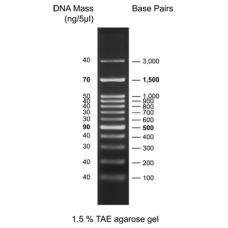 100 bp DNA Ladder, ready to use